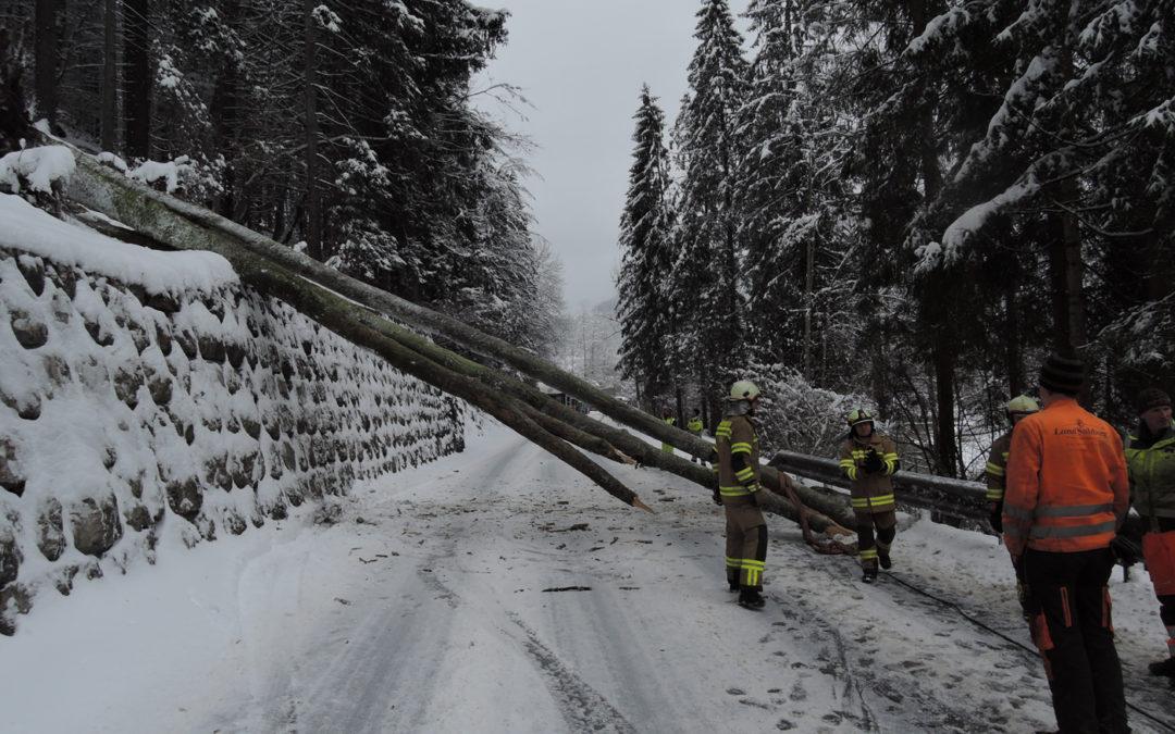 Baum auf Straße, 22. Jänner 2018