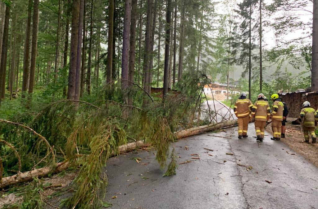 Baum umgestürzt Faistau am 29.06.2021