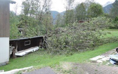 Mehrere umgestürtzte Bäume am 03.10.2020
